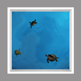 Ceiling Mural kf-se-df060_4x4md_r44 av David Fleetham